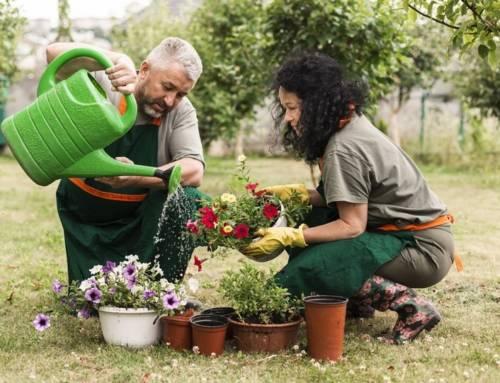 Dicas para ter um jardim lindo e fácil de cuidar