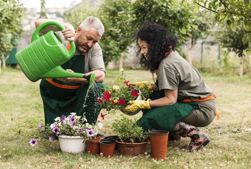Cuide do seu Jardim